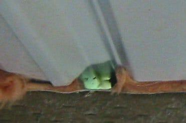 Pole building access gaps easily pass mice