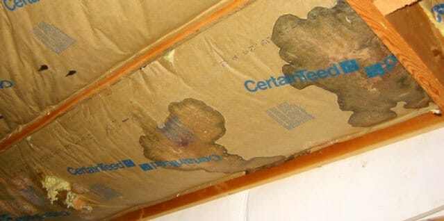 Insulation ruined by mouse urine